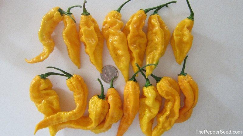 Yellow Bhuts
