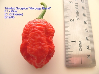 morouga-scorpion-f1-chris-phillips-2