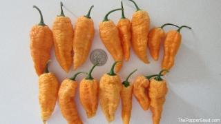 Peach Bhut Jolokias