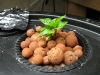 imchocolate bhut jolokia sprout 3