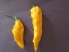 Yellow Bhut Jolokias